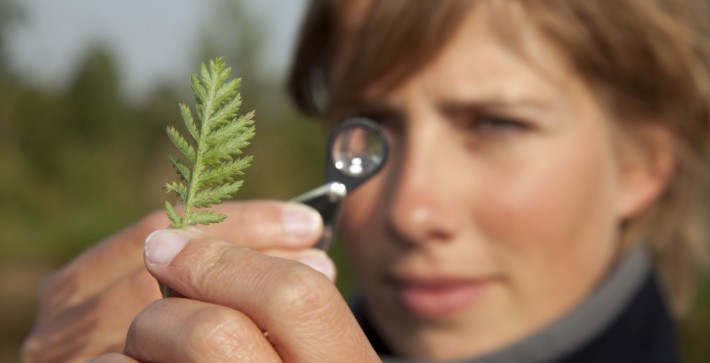 British Ecological Society image of ecologist with a plant