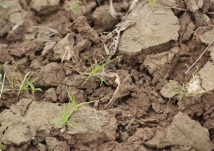 Environmental Audit Committee releases report on soil health