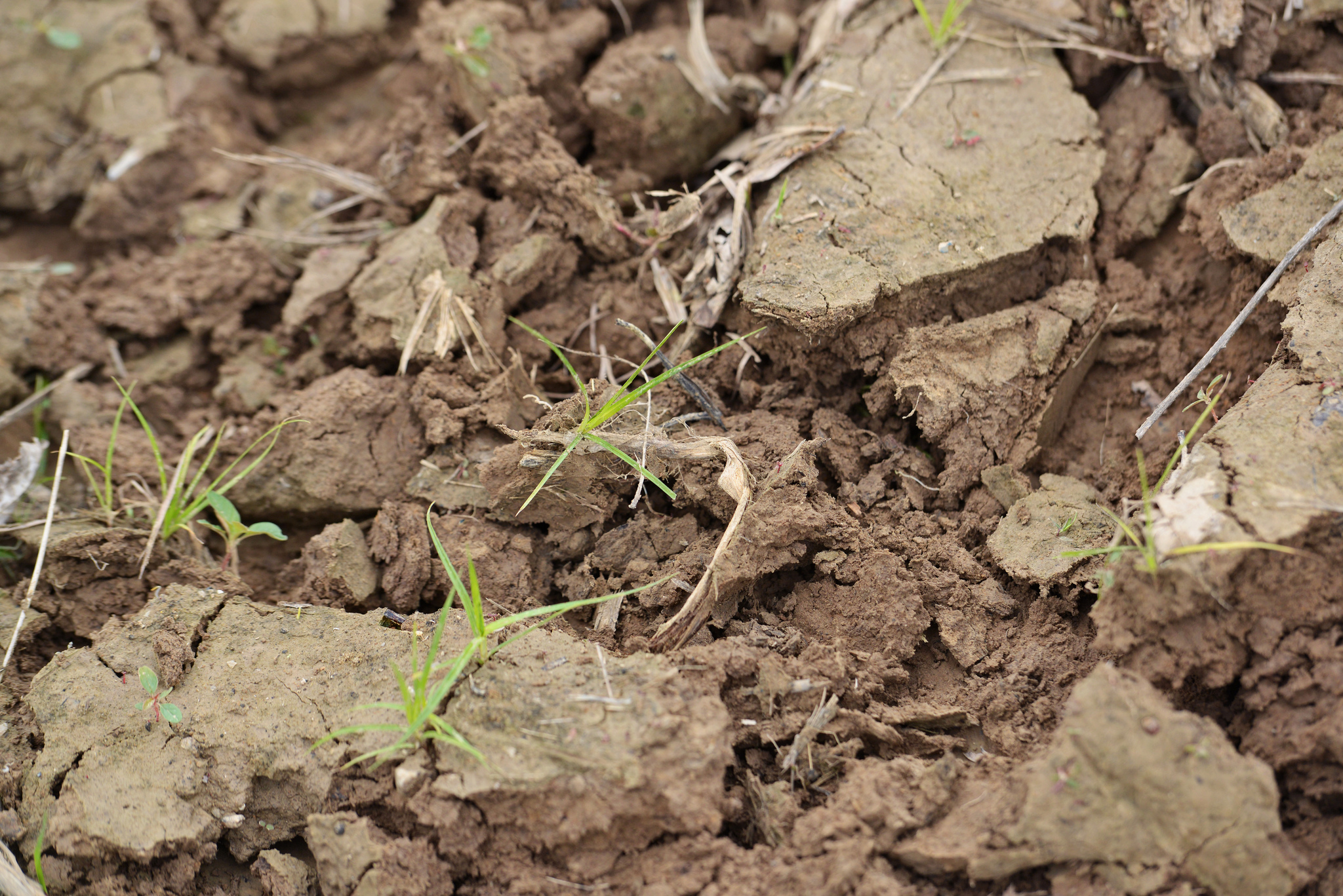 Image: United Soybean Board