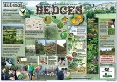 Hedges Wallchart