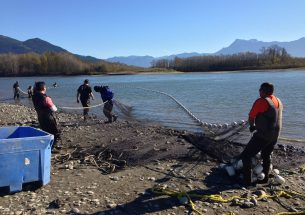 Press Release: Hidden salmon diversity sustains First Nations fisheries