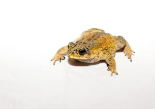 Press Release: Stowaway frogs being stopped by border security