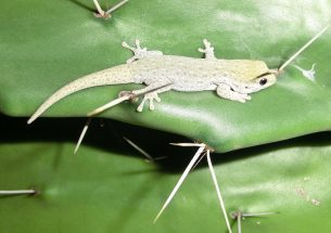 Press Release: Hedges in agricultural areas protect biodiversity on Madagascar