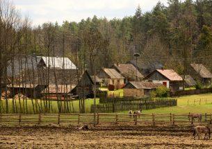 Press Release: Biodiversity begins at home: saving old villages helps save farmland birds