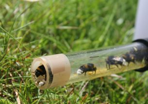 Press Release: Impact of pesticide on bumblebees revealed by taking experiments into the field