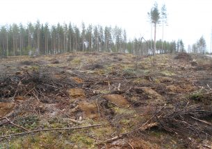 Press Release: Diversified management provides multiple benefits in boreal forests