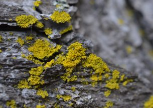 "Press Release: Lichens and the ""health"" of ecosystems"