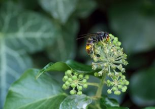 Innovative measure enables identification of threats to biodiversity