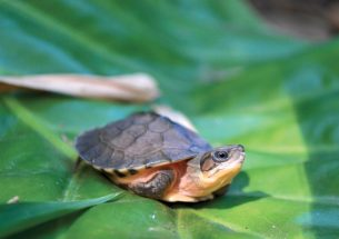 Q&A: How can we save the world's turtle and tortoise species from the wildlife trade?