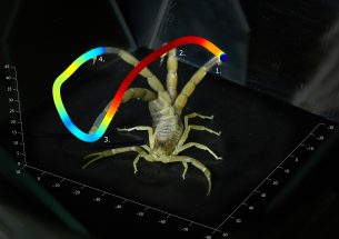 Press release: A sting in the tail: high-speed video captures death stalker scorpion's strike