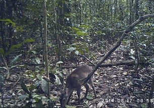 Press Release: Estimating the Size of Animal Populations from Camera Trap Surveys