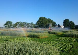 Press Release: Choice of winter cover crop mixture steers summer crop yield