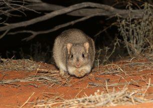 Press Release: Know your enemy - Exposing threatened species to predators improves evasive behaviours