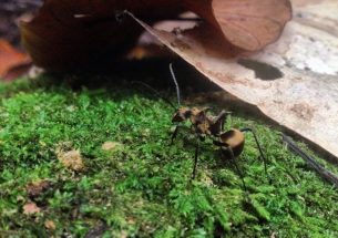Press Release: Ants dominate waste management in tropical rainforests