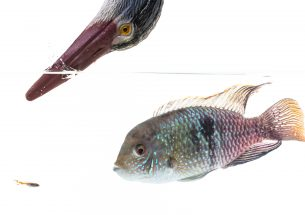 Press Release: Fish have complex personalities, research shows