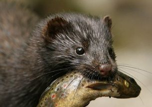 Press Release: A prioritised list of invasive alien species threatening the UK's environment