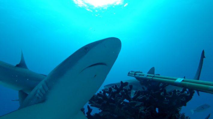710 Shark Oil Filling Hine