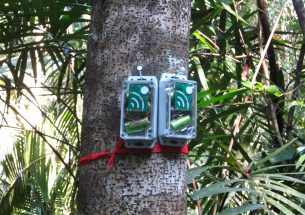 Listening in: Acoustic monitoring devices detect illegal hunting and logging