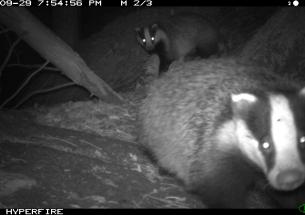 Citizen scientists help capture wild mammals on camera