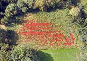 Using drones to estimate crop damage by wild boar