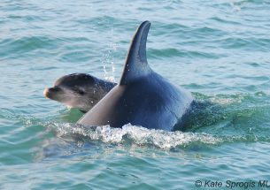 Dolphin and bear studies have paved the way to improved population forecasting