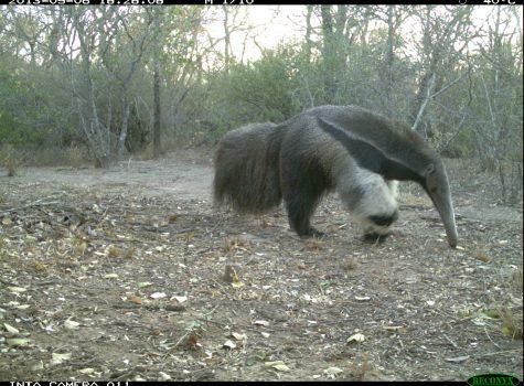 Gran Chaco: Biodiversity at high risk