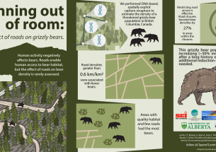 The road to recovery: Closing roads counters effects of habitat loss for grizzly bears