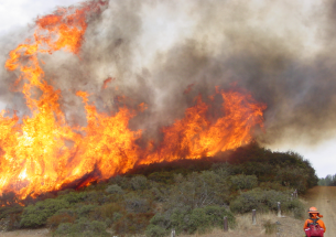 Scientists study the effects of wildfire management on California avian populations
