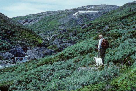 BES/NØF Symposium: Treelines: Where Next?