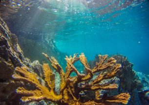 New research provides 'oases' of hope for the future of coral reefs