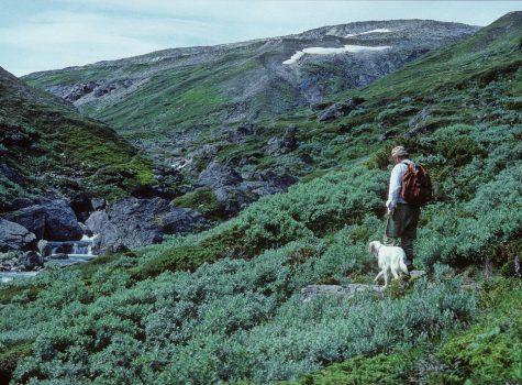 BES/NØF Symposium: Treelines and Beyond