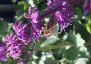 Research shows pesticides influence bee learning and memory