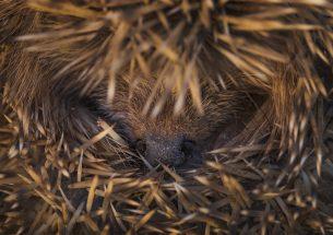 Capturing Ecology: Photographic Exhibition