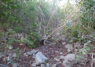 Hurricane Maria gave ecologists rare chance to study how tropical dry forests recover from extreme weather events