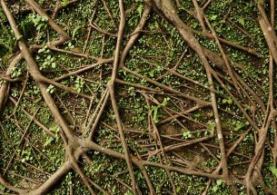 Long-term ecological experiments in plant-soil ecosystems