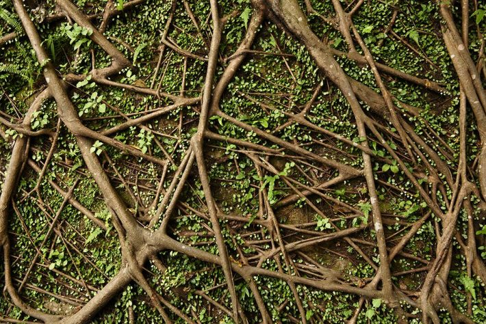 A collection of intertwined branches