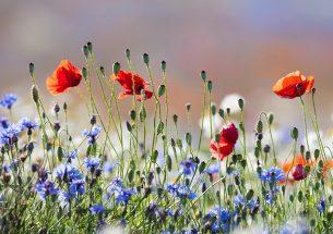 Welsh Public Goods Scheme and Biodiversity: Consultation Response