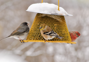 Researchers study people who feed birds in their backyards with implications for bird conservation