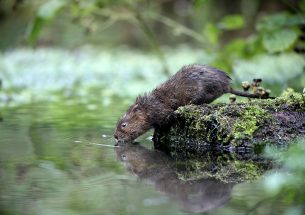 Pond ecology and conservation in the Anthropocene