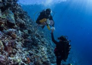 Menu change for corals in warming reefs