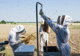 Organic farming improves honeybee colony performance in a crucial flower-scarce period