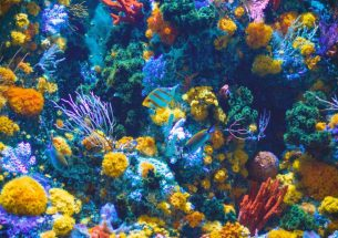 Fussy fish can have their coral and eat it too