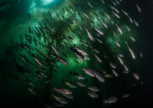 Framework for Measuring Effectiveness of Marine Protected Areas