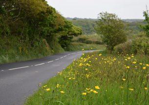 Road verges provide refuge for pollinators