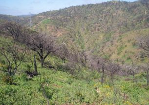 Wildfires disrupt important pollination processes by moths and increase extinction risks
