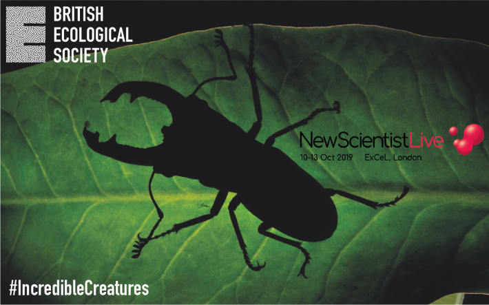 The silhouette of a stag beetle on a leaf