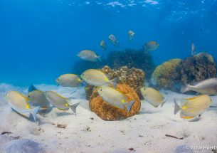 Severe coral loss leaves reefs with larger fish but low energy turnover