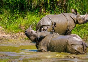 What actions played a crucial role in curbing the rhinoceros poaching in Nepal?