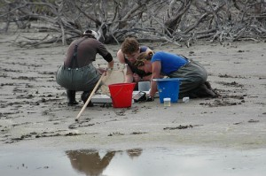 Students working on the beach